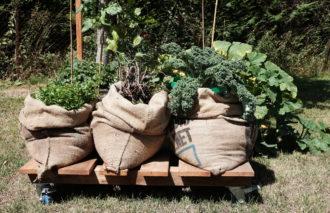 pop up vegetable growing - gardening in schools